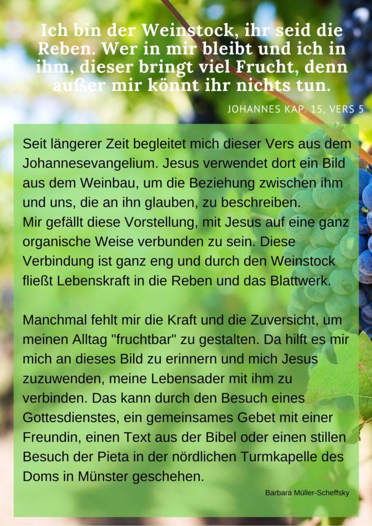 Meditation Weinstock Und Reben